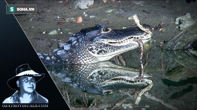 Cá sấu tấn công rắn lục nước: Tuyệt chiêu khiến đối thủ chết ngay lập tức - ảnh 1