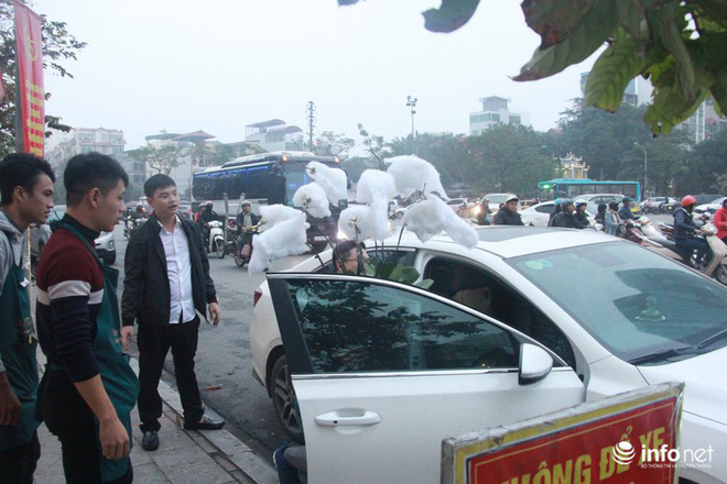 Lan Hồ Điệp vượt hơn 1.000km từ Đà Lạt, đã ra tới Hà Nội phục vụ người chơi Tết - Ảnh 11.
