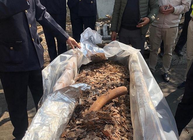 Cận cảnh 2 tấn ngà voi, vảy tê tê châu Phi ngụy trang trong hộp gỗ - Ảnh 6.