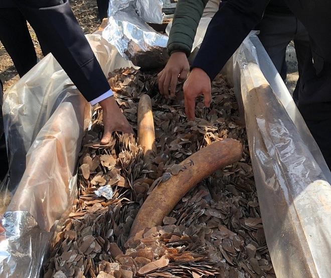 Cận cảnh 2 tấn ngà voi, vảy tê tê châu Phi ngụy trang trong hộp gỗ - Ảnh 7.