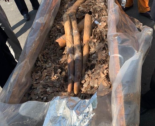 Cận cảnh 2 tấn ngà voi, vảy tê tê châu Phi ngụy trang trong hộp gỗ - Ảnh 8.