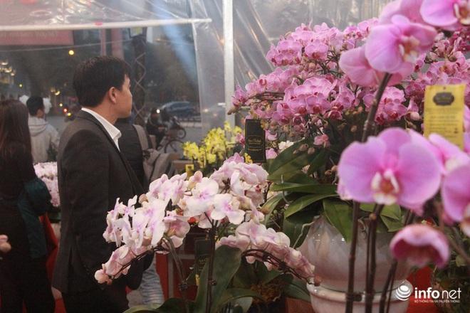 Lan Hồ Điệp vượt hơn 1.000km từ Đà Lạt, đã ra tới Hà Nội phục vụ người chơi Tết - Ảnh 7.
