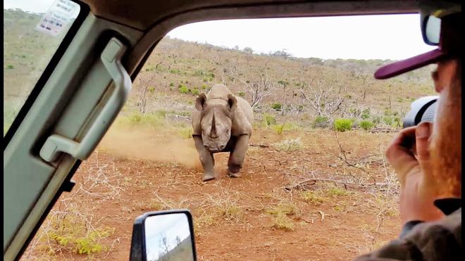 Không thích làm người mẫu, tê giác nổi khùng tấn công luôn nhiếp ảnh gia - Ảnh 1.