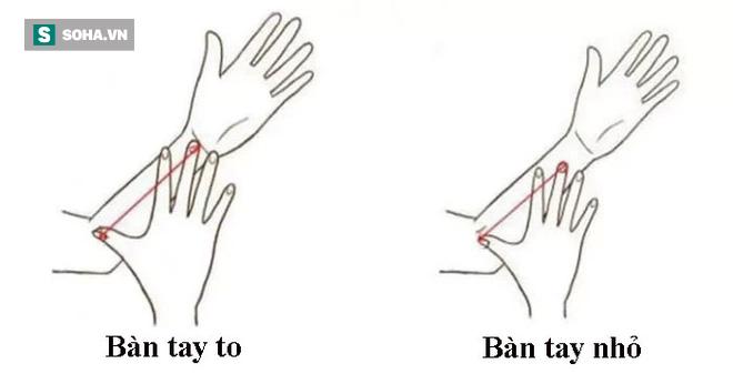 Kích thước bàn tay nói lên tính cách bạn: Người có ngón tay ngắn có thể rất giỏi lãnh đạo - Ảnh 1.