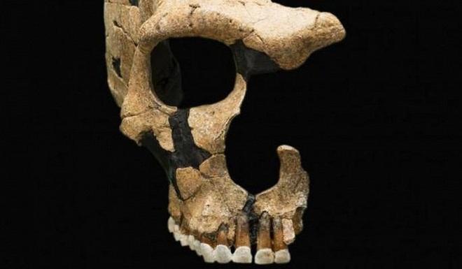 Nguyên nhân nào khiến 8 loài người cổ tuyệt chủng? - Ảnh 4.