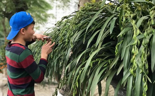 """Hơn 300 triệu 1 chậu hoa lan Trần Mộng, đại gia có tiền cũng không mua được vì """"cháy"""" hàng"""