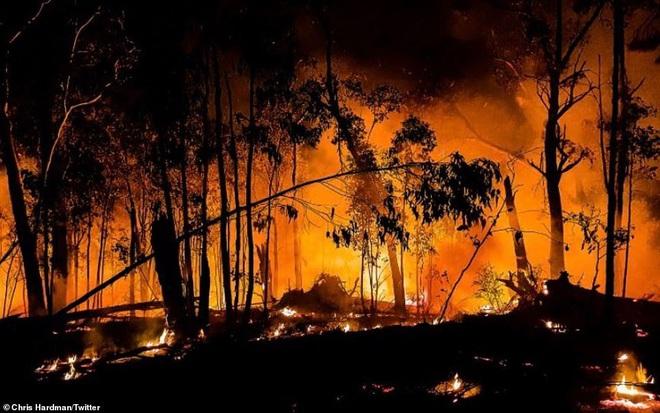Nắng nóng, cháy rừng dữ dội ở Australia: Gấu koala khát khô, phải chạy đi xin người qua đường cho uống nước - Ảnh 8.