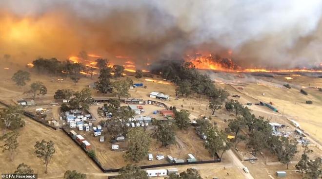 Nắng nóng, cháy rừng dữ dội ở Australia: Gấu koala khát khô, phải chạy đi xin người qua đường cho uống nước - Ảnh 9.