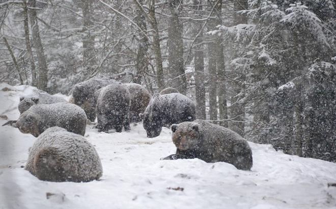 Tình trạng nóng kỉ lục hơn 100 năm mới lặp lại: Gấu Nga mất ăn, gấu Ukraine mất ngủ