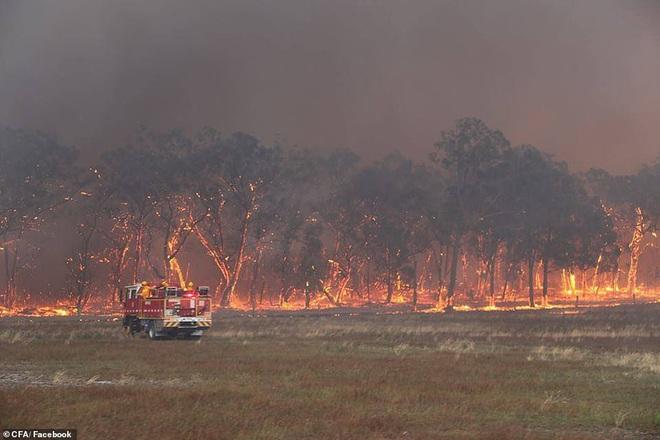Nắng nóng, cháy rừng dữ dội ở Australia: Gấu koala khát khô, phải chạy đi xin người qua đường cho uống nước - Ảnh 4.