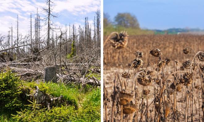 Thế giới sẽ đối mặt với hàng loạt thảm họa nếu rừng Amazon cháy rụi: 90% bệnh tật không có thuốc chữa, 50% loài sinh vật bị tiêu diệt - Ảnh 6.