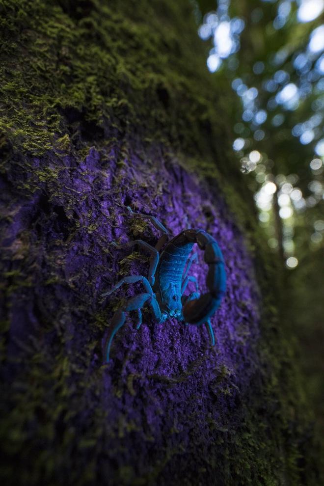 Kẻ gác đêm: Bí mật triệu năm của loài trăn khổng lồ, chỉ có duy nhất ở 1 nơi trên Trái Đất - Ảnh 5.