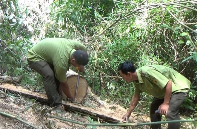 Vụ phá rừng đặc dụng tại Đắk Lắk: Cần làm rõ những điểm bất thường - Ảnh 2.