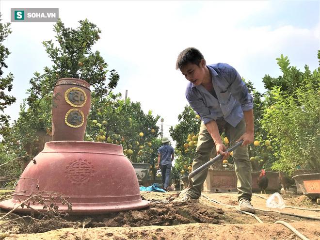 """Hà Nội lần đầu xuất hiện chuột tài lộc """"cõng"""" quất trị giá gần chục triệu đồng chưng Tết 2020 - Ảnh 7."""