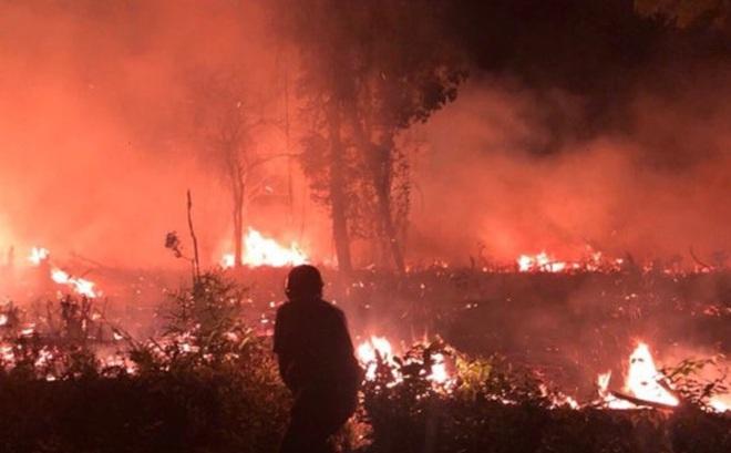 Cháy rừng quốc gia Phú Quốc do người dân đốt dọn phát hoang