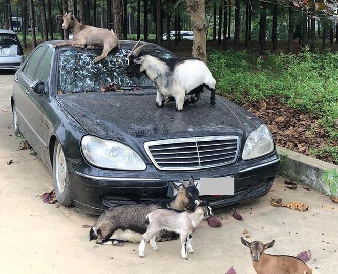 Xót xa nhìn loạt xe Mercedes-Benz đắt đỏ bị vứt xó ở Hà Nội - Ảnh 1.