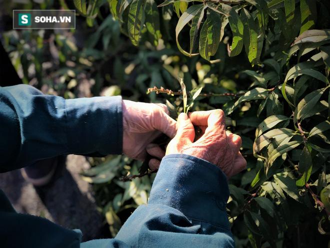 Vặt lá đào thuê, kiếm hơn chục triệu mỗi tháng - Ảnh 4.