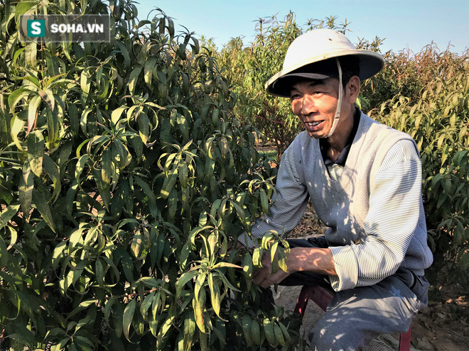 Vặt lá đào thuê, kiếm hơn chục triệu mỗi tháng - Ảnh 7.
