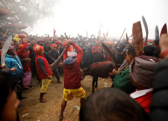 Rợn người tại lễ hiến tế động vật đẫm máu nhất thế giới - ảnh 3