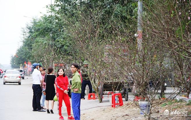 Đã mắt ngắm cây quýt cổ thụ giá gần trăm triệu đồng ở thành Vinh - Ảnh 2.