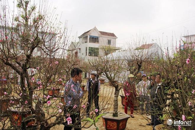Đã mắt ngắm cây quýt cổ thụ giá gần trăm triệu đồng ở thành Vinh - Ảnh 4.