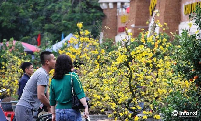 Đã mắt ngắm cây quýt cổ thụ giá gần trăm triệu đồng ở thành Vinh - Ảnh 19.