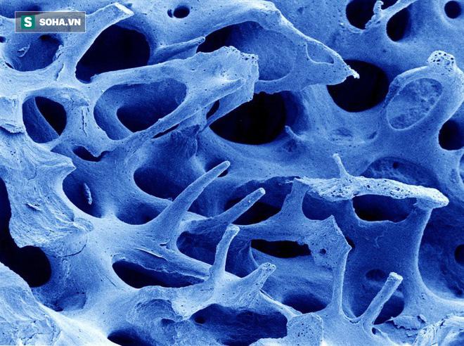 16 phần trên cơ thể trông như thế nào dưới kính hiển vi: Bạn sẽ ngạc nhiên khi nhìn thấy - Ảnh 2.