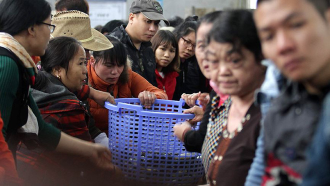 Hàng nghìn người chuyền tay nhau phóng sinh hơn 10 tấn cá ở Sông Hồng - Ảnh 2.