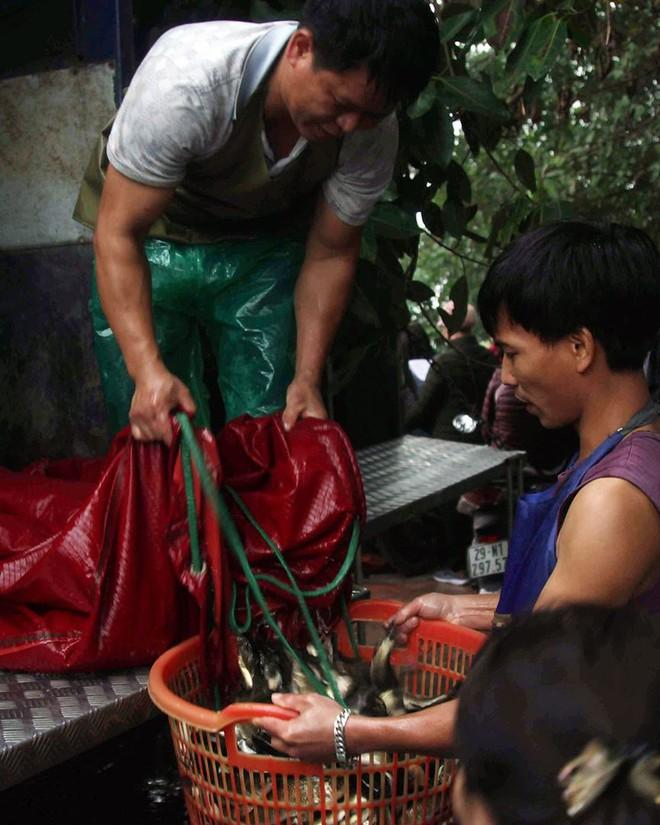 Hàng nghìn người chuyền tay nhau phóng sinh hơn 10 tấn cá ở Sông Hồng - Ảnh 3.