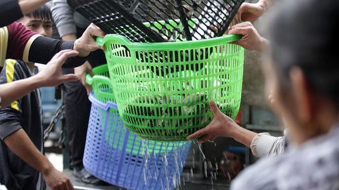 Hàng nghìn người chuyền tay nhau phóng sinh hơn 10 tấn cá ở Sông Hồng - Ảnh 4.