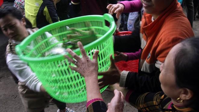 Hàng nghìn người chuyền tay nhau phóng sinh hơn 10 tấn cá ở Sông Hồng - Ảnh 5.