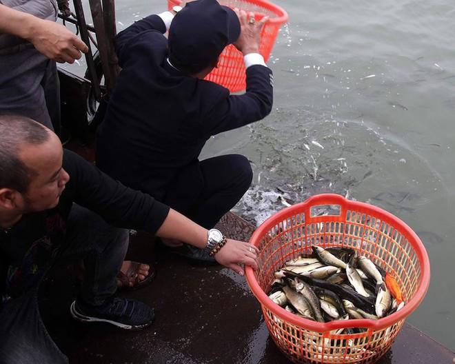 Hàng nghìn người chuyền tay nhau phóng sinh hơn 10 tấn cá ở Sông Hồng - Ảnh 9.