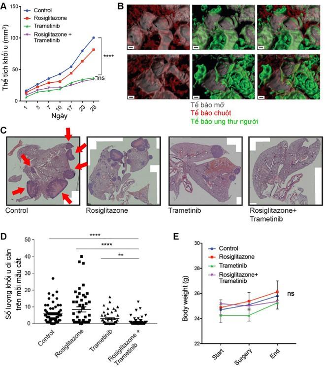 Hy vọng mới cho bệnh nhân ung thư vú: Có thể biến tế bào ung thư vú thành tế bào mỡ vô hại - Ảnh 3.