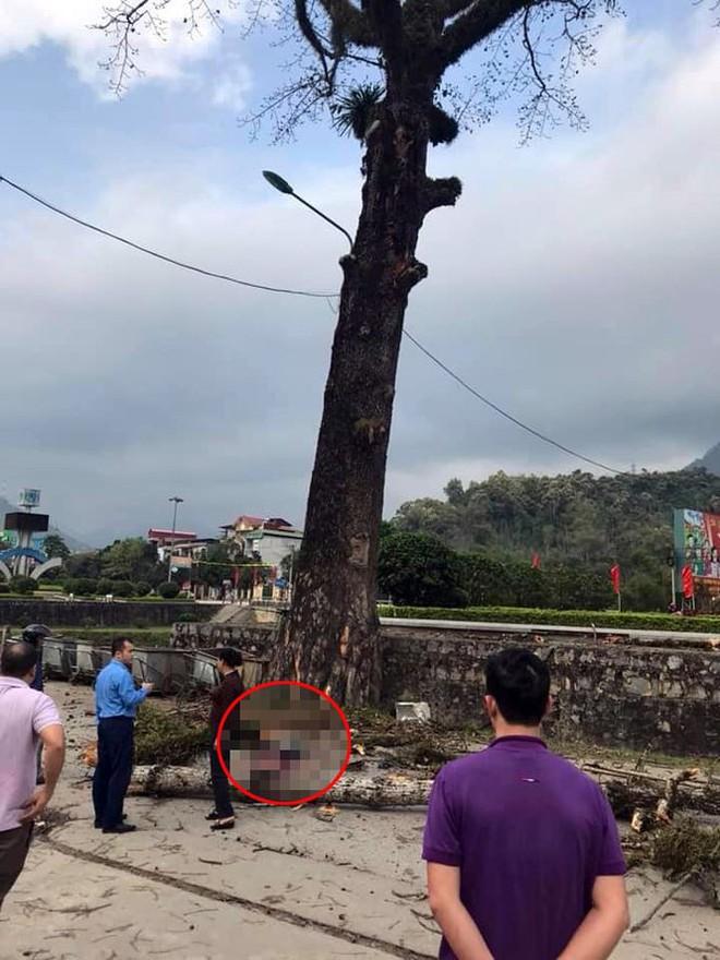 Nam thanh niên đi bộ bị cành cây gạo rơi trúng tử vong ở Hà Giang - Ảnh 1.