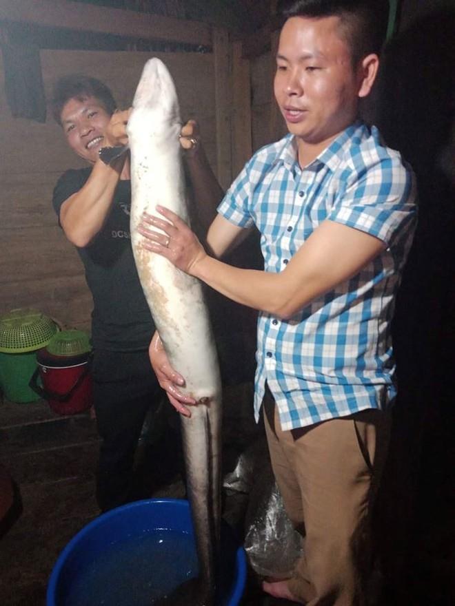 Cá chình khủng dài 1,5 mét mắc lưới ngư dân Quảng Bình - Ảnh 1.