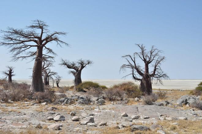Choáng với sự sống đẹp huy hoàng tại chảo muối được mệnh danh là Vùng đất chết - Ảnh 18.
