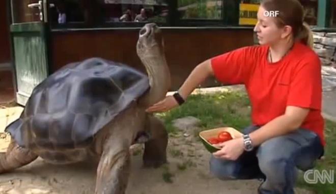 Đôi rùa khổng lồ không nhìn mặt nhau sau 115 năm chung sống: Đến rùa cũng không chịu được lời vợ cằn nhằn - Ảnh 2.