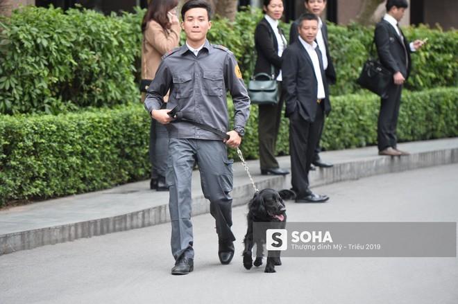 [Ảnh] 3 chú khuyển đặc biệt kiểm tra khách sạn Melia trước ngày Chủ tịch Kim Jong-Un đến Việt Nam - Ảnh 9.