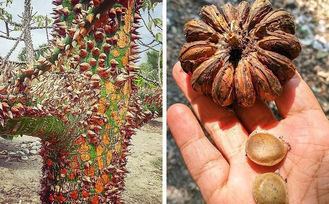 """7 loài cây sở hữu năng lực kỳ dị: Ăn thịt con mồi; """"bắn đạn"""" để đuổi kẻ thù"""