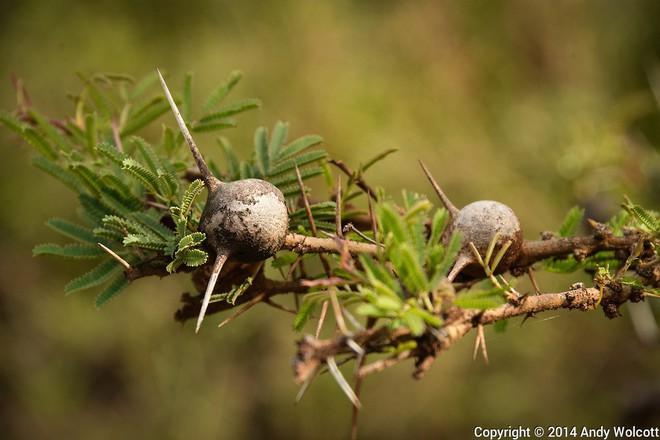 7 loài cây sở hữu năng lực kỳ dị: Ăn thịt con mồi; bắn đạn để đuổi kẻ thù - Ảnh 5.