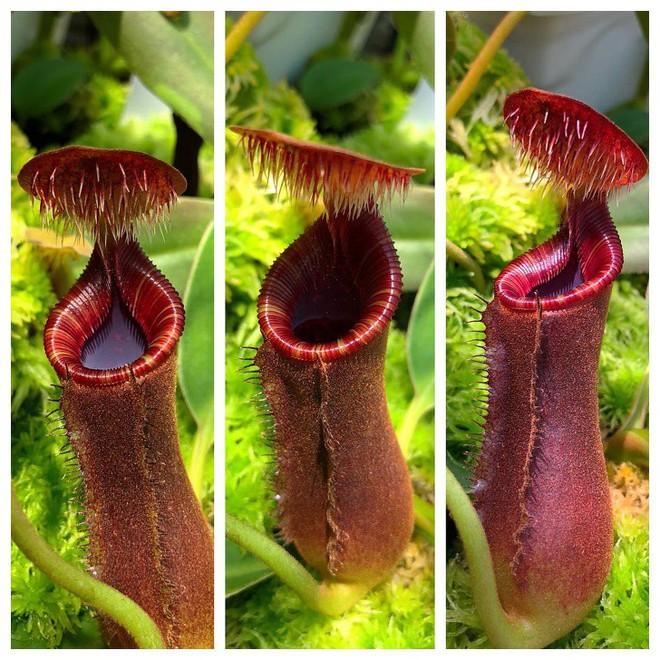 7 loài cây sở hữu năng lực kỳ dị: Ăn thịt con mồi; bắn đạn để đuổi kẻ thù - Ảnh 7.