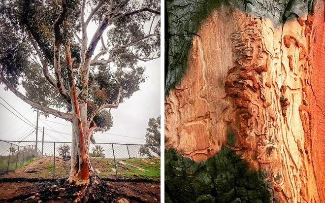 7 loài cây sở hữu năng lực kỳ dị: Ăn thịt con mồi; bắn đạn để đuổi kẻ thù - Ảnh 9.