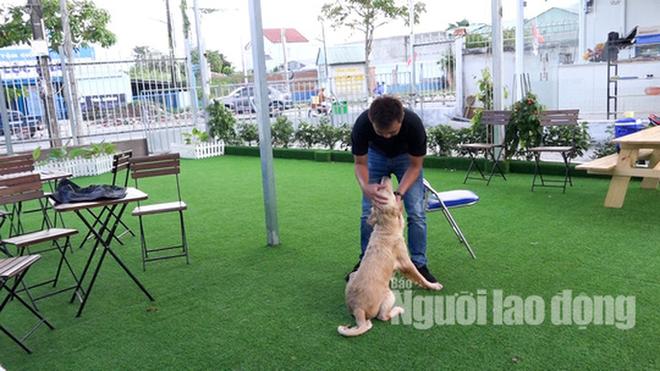 Độc đáo khu phức hợp tiện nghi có massage dành cho chó cưng - Ảnh 2.