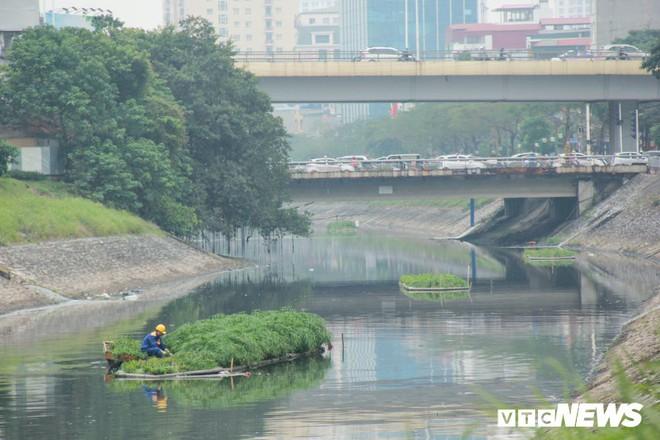 Sau 4 năm thả bè thủy trúc, nước sông Tô Lịch giờ ra sao? - Ảnh 1.