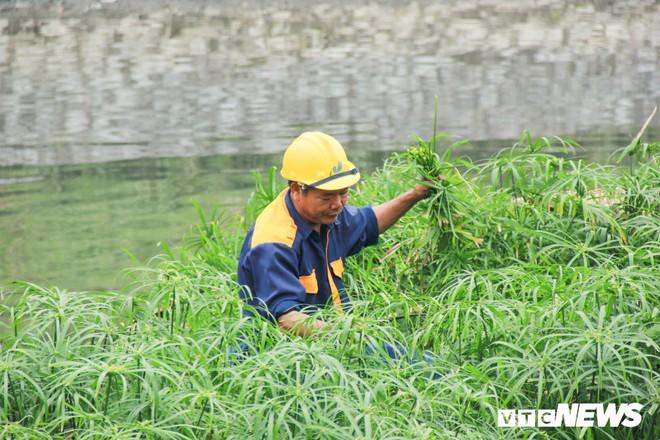 Sau 4 năm thả bè thủy trúc, nước sông Tô Lịch giờ ra sao? - Ảnh 4.