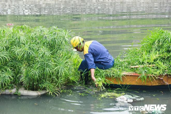Sau 4 năm thả bè thủy trúc, nước sông Tô Lịch giờ ra sao? - Ảnh 8.