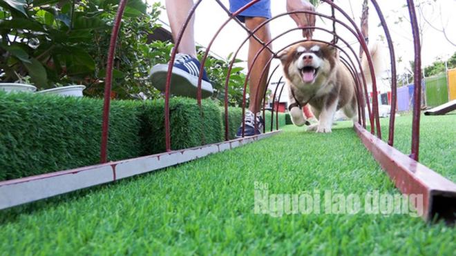 Độc đáo khu phức hợp tiện nghi có massage dành cho chó cưng - Ảnh 10.