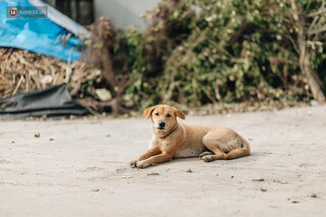 Về thăm ngôi làng ở Hà Nội ăn cả tấn thịt chó vào mùng 4 Tết hàng năm: Không ép bất cứ ai nếu họ không muốn ăn - Ảnh 10.