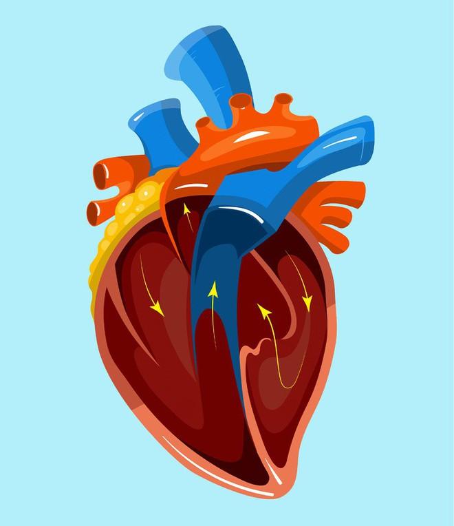 Ai quan tâm đến sức khoẻ tim, gan, phổi, thận cần phải biết điều này - Ảnh 1.