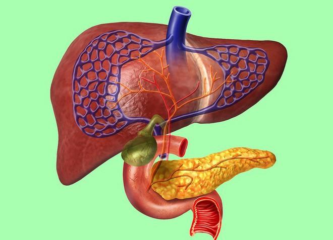 Ai quan tâm đến sức khoẻ tim, gan, phổi, thận cần phải biết điều này - Ảnh 2.